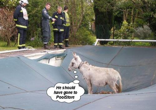 donkey in a swimming pool